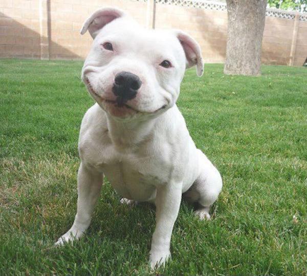 собака-улыбака 4